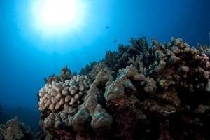 KOna Reefscape 2