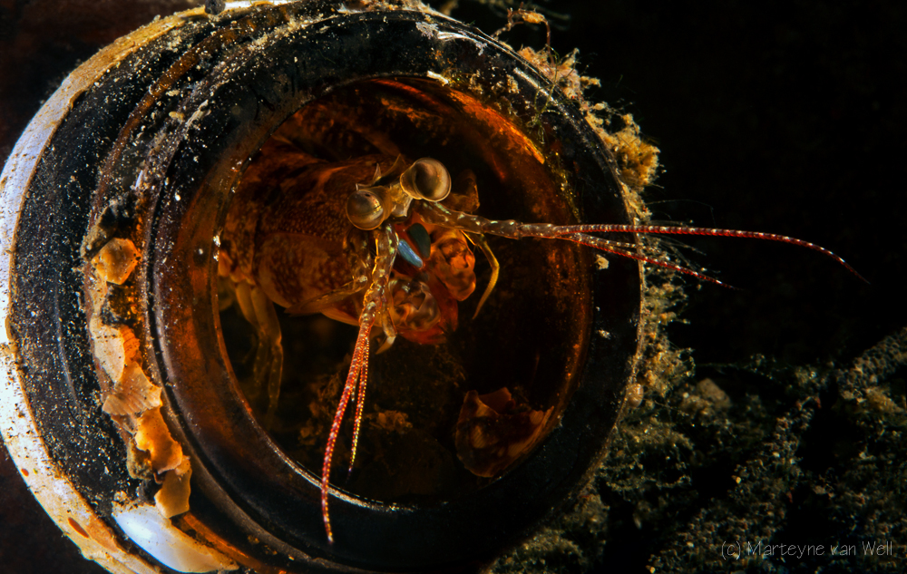Marteyne van Well // Shrimp in a Bottle, taken at Jahir I, Lembeh, Indonesia with Canon 5D Mark III + Canon EF 100mm F/2.8L IS USM. Settings: f22, 1/250, ISO 100