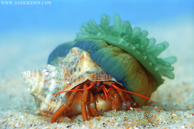 Weekly Featured Underwater Photographer - Andrey Nekrasov ...