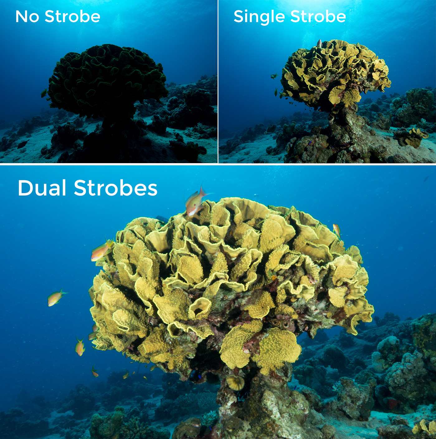 single or dual strobe
