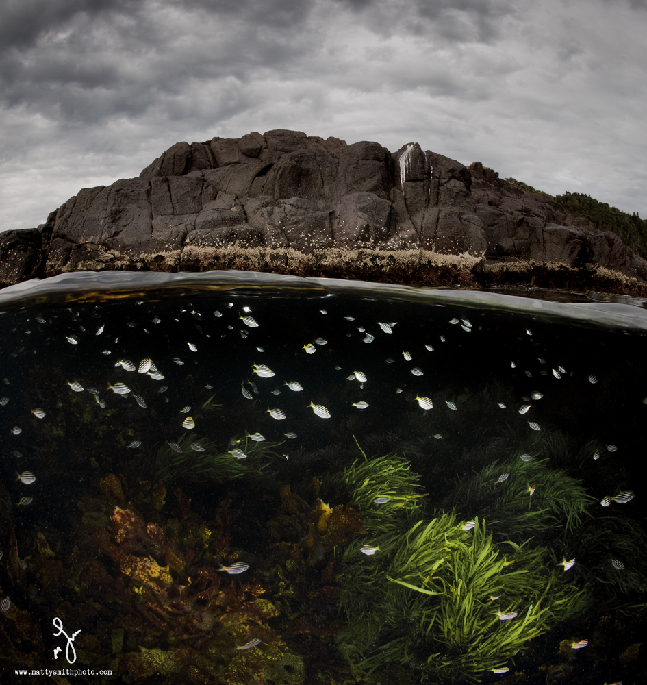© Matthew Smith | The Aquarium.. Well Bushrangers Bay, NSW actually!! Awesome place for a cold water snorkel, here hundreds of little stripeys were feeding in the current of a fast dropping tide.