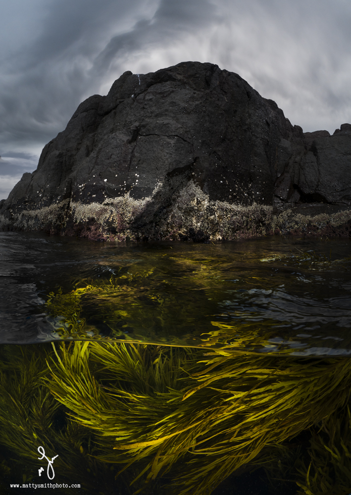 © Matthew Smith | Dark & Stormy. Kelp beds at one of my favourite places to shoot over/under images. I also found colourful nudibranchs hanging out here in less than a foot water... I feel a low tide nudibranch over/under coming on!