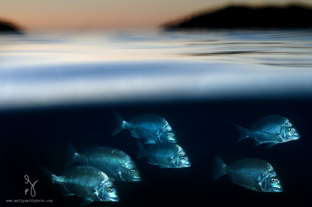 """© Matthew Smith 