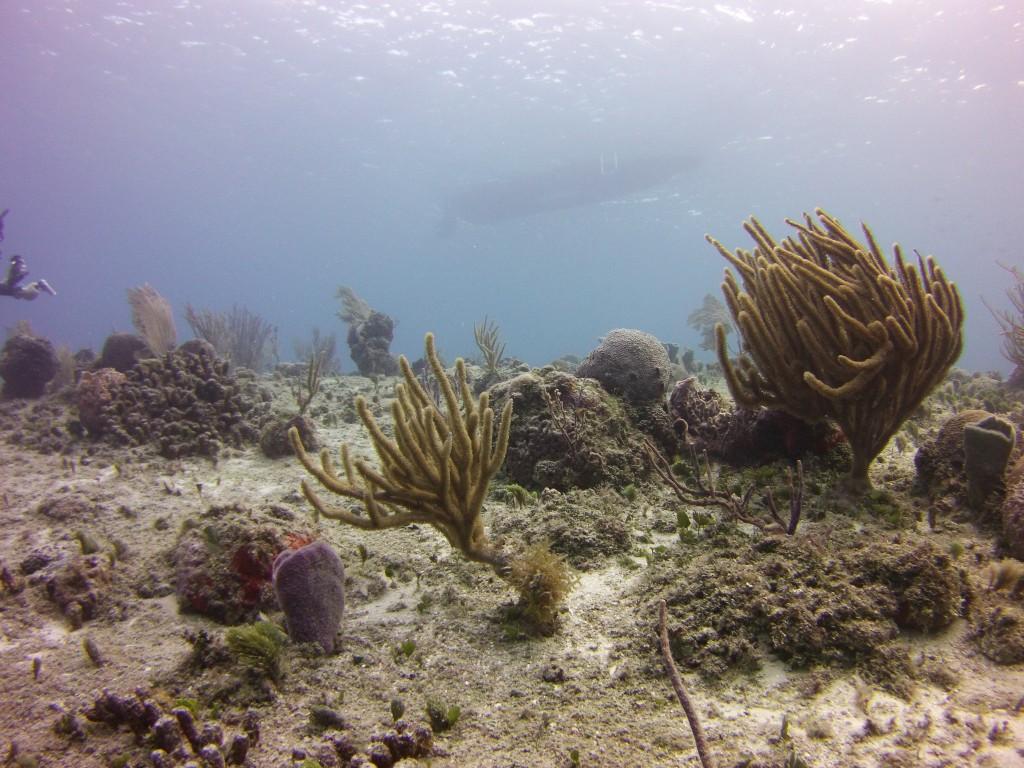 Sealife Micro HD Photo sample