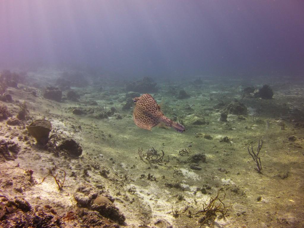 Underwater mode, no filter attached
