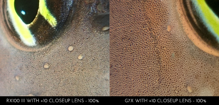 Sony RX100 III vs Canon G7X - Both on 100% crop, showing details