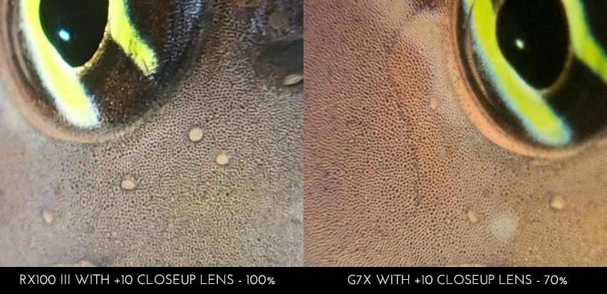 Sony RX100 III vs Canon G7X - RX100 III on 100% crop, G7X on 70%, showing details