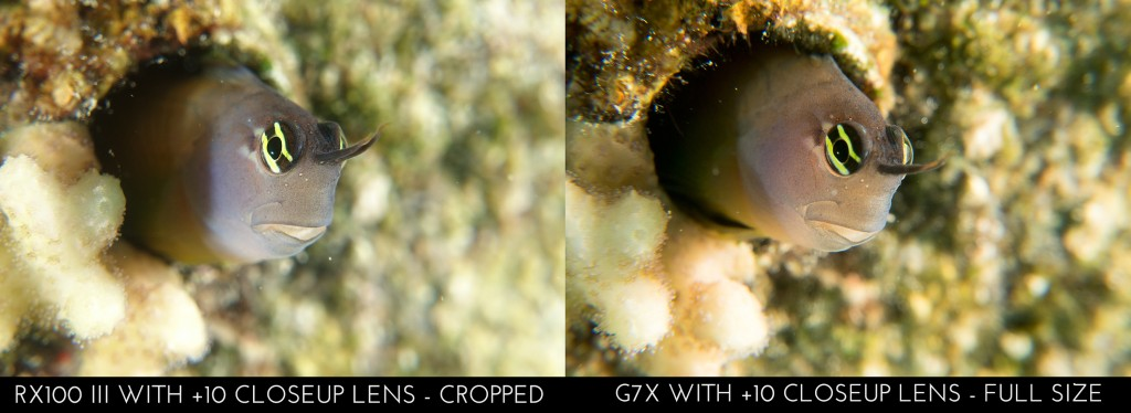 Sony RX100 III vs Canon G7X - RX100 III cropped to match G7X magnification