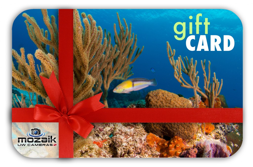 Gift Card Diver Underwater Photogrpaher