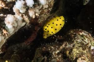 Fantasea G9X Underwater Macro 1