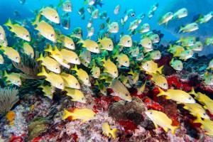 Sony A6300 Underwater Samples - Isla Mujeres 4