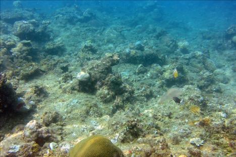Degraded Reef Photo credit: Julia Herbolsheimer, 2015