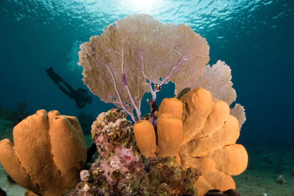 Cozumel Corals