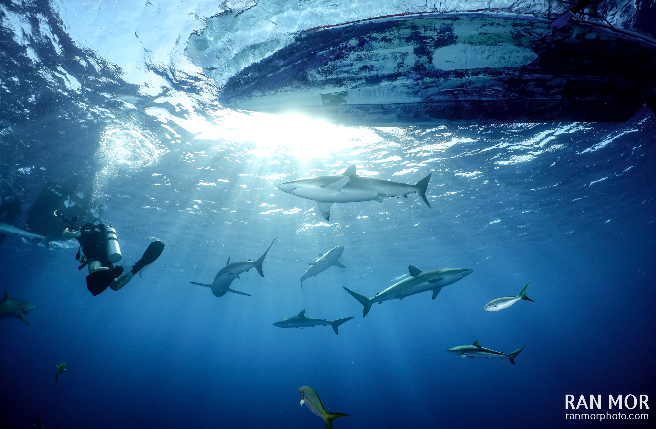 Silky Sharks – Gardens of the Queen, Cuba taken with FRX100 V Bundle
