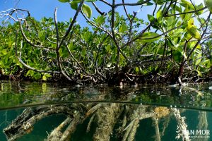 Mangroves in Gardens of the Queen - Sony RX100 Mark V Underwater
