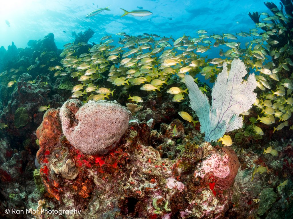 Isla Mujeres, Mexico, Wide Angle Coral Reef