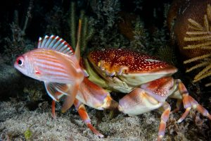 Night Dive Crab and Squirrel Fish