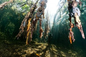 Mangroves Gardens of the Queen Cuba