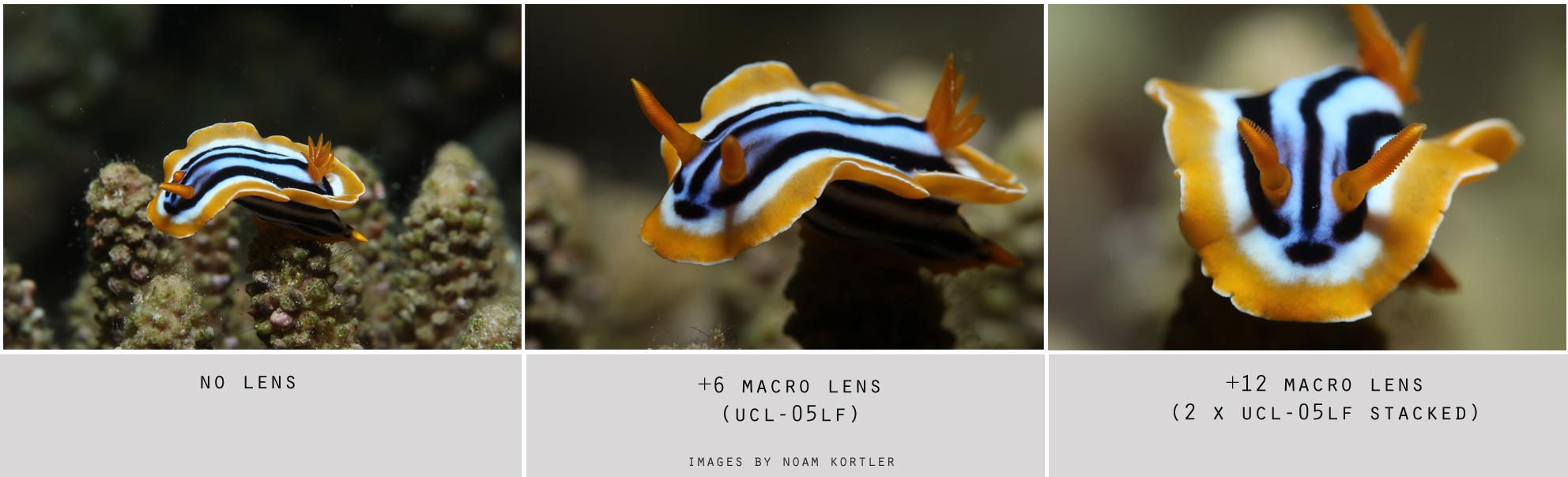 UCL-05LF Wet Macro Lens