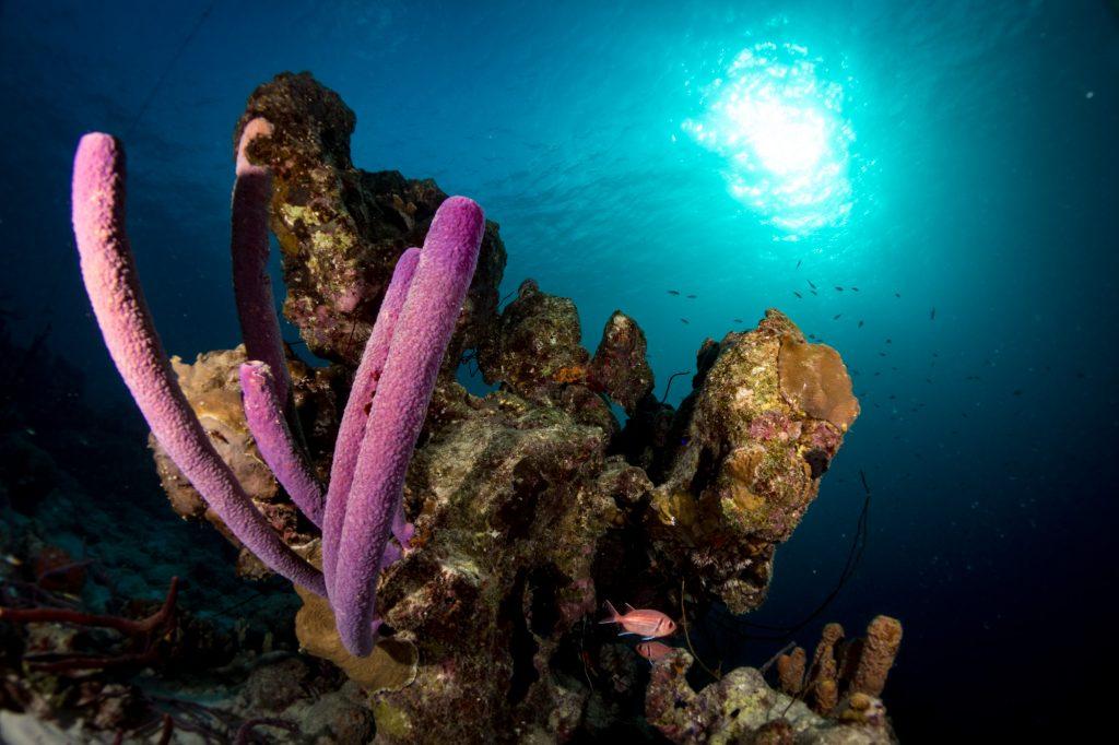 Canon G7X Mark II Underwater - Bonaire Coral