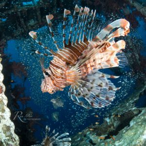 Lionfish and Glass fish in wreck taken with the Sony A6500 + 16mm lens + Fisheye converter in the Fantasea FA6500 + Dome