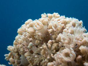 Olympus TG-5 Underwater Coral close-up