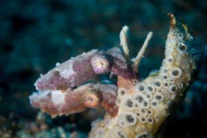 Sony RX100 V Underwater - Cuttlefish