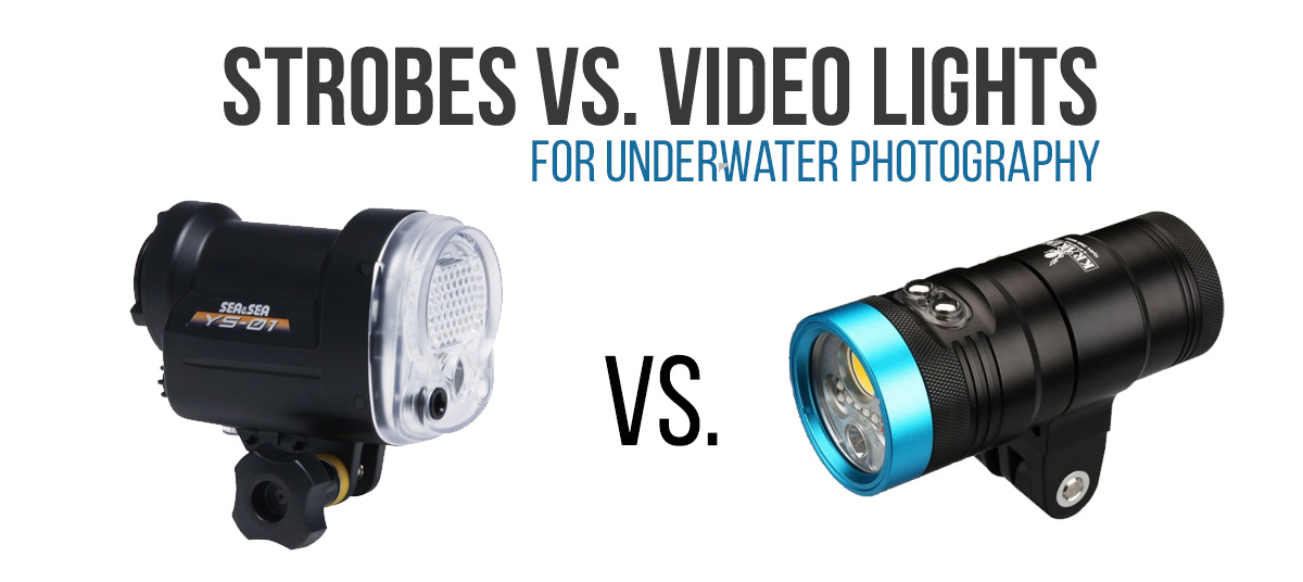 strobes vs video lights for underwater photography