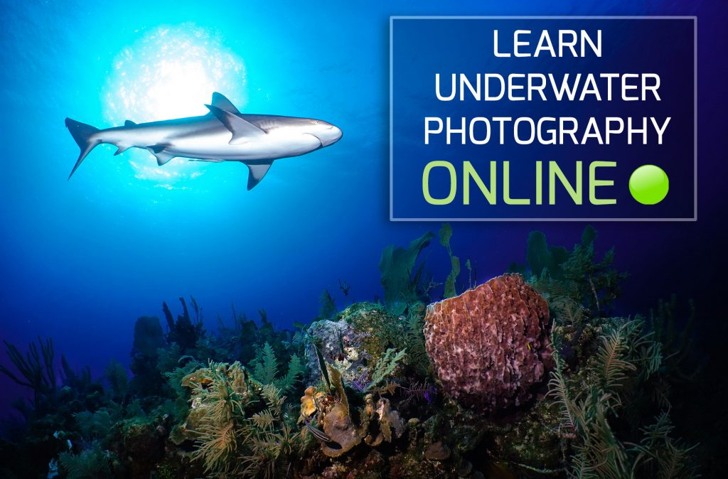 Learn underwater photography online