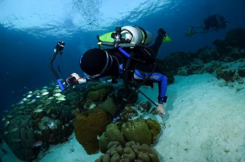 Diver shooting in Bonaire