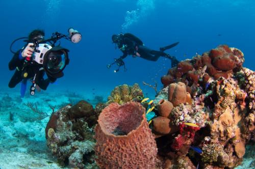 Diver shooting in Cozumel