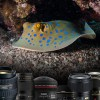 Choosing the best lens for DSLR underwater