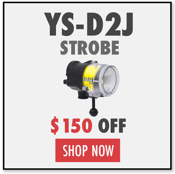 Black Friday Deals on YS-D2J Underwater strobe