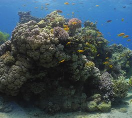 White Balance Underwater