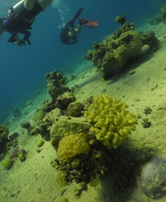 Underwater Red Filter