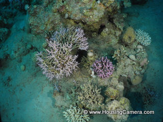 Photos in deep dives