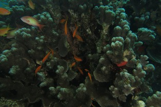 Under Exposed Image Underwater